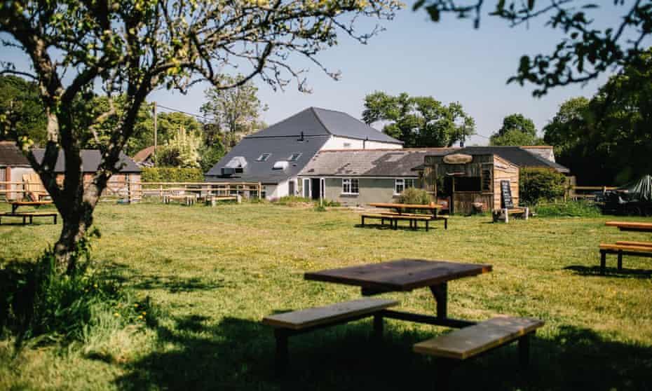 Gaggle of Geese, Buckland Newton, Dorset.
