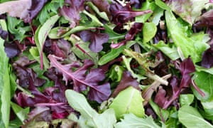 mixed colour cut salad leaves