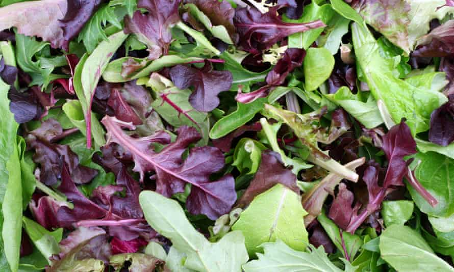 mixed colour cut salad leaves