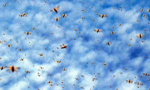 Argentina's government has been slow to act on a locust infestation, say farmers.
