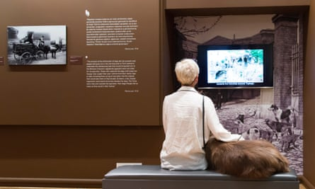 The Istanbul Research Institute's current exhibition is Four-Legged Municipality: Street Dogs of Istanbul