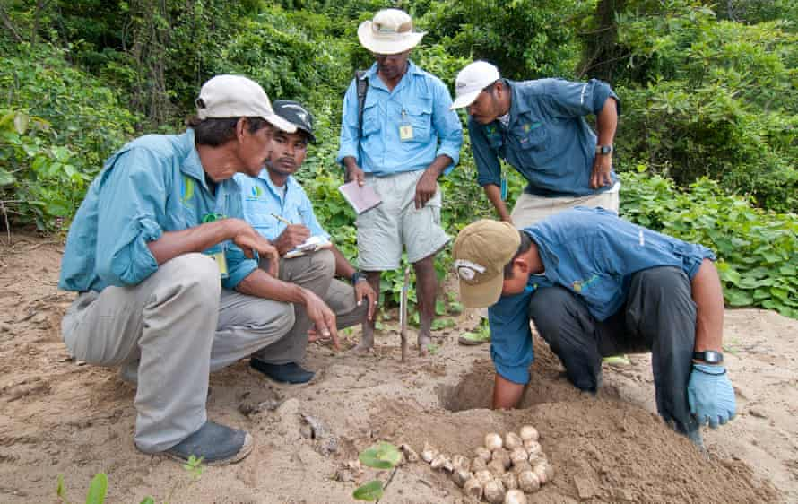 Paso Pacifico turtle rangers count the number of eggs in a single nest for data on poaching and nesting success.
