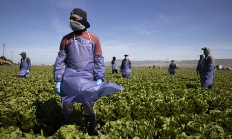 Life as an undocumented farmworker: 'we are chess pieces that politicians move around'