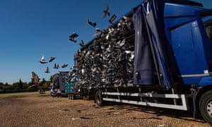Racing pigeons are released in Northamptonshire