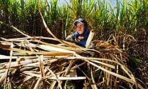 Sugar plantation worker