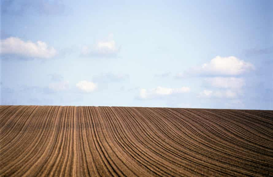 A field planted of winter wheat in Suffolk.
