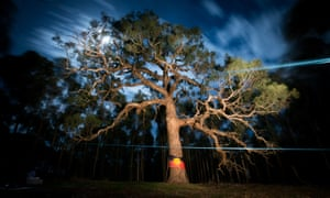 More than 260 Djap Wurrung trees in western Victoria are due to be bulldozed to make way for a 12km duplication of the Western Highway. Protesters, some who have been camping at the site for more than a year, fear a standoff could come to a head on Thursday night.