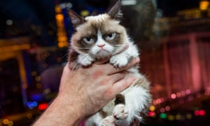 Grumpy Cat being held