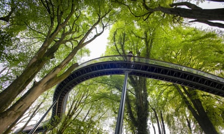 The Viper walk, a raised walkway under a canopy of trees