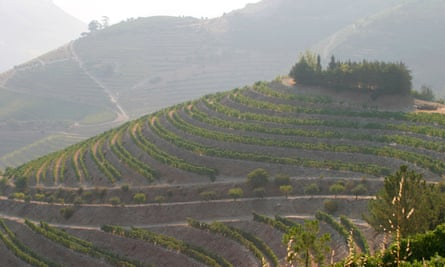 Portugal's best-known wine region, the Douro, where the steep terraced vineyards run down to the banks of the Douro River.