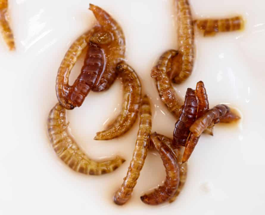 Mealworms flavoured with aniseed