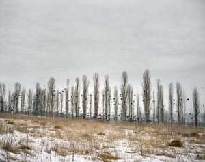 Crows flying over a deserted field in winter, Ukraine, 2007