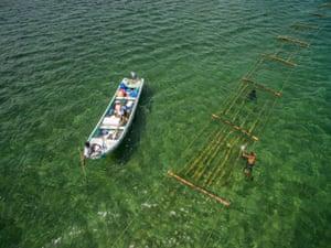 Seaweed rafts