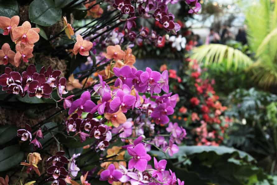 Orchid Festival 2020 in the Princess of Wales Conservatory at the Royal Botanic Gardens, Kew