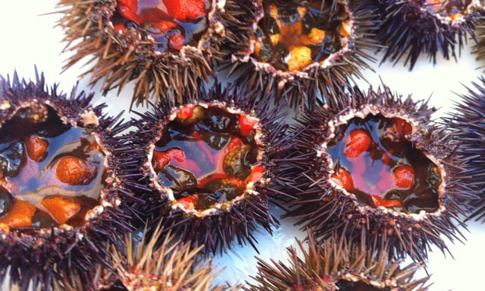 sea urchin is in demand it s the ocean s foie gras delicious but