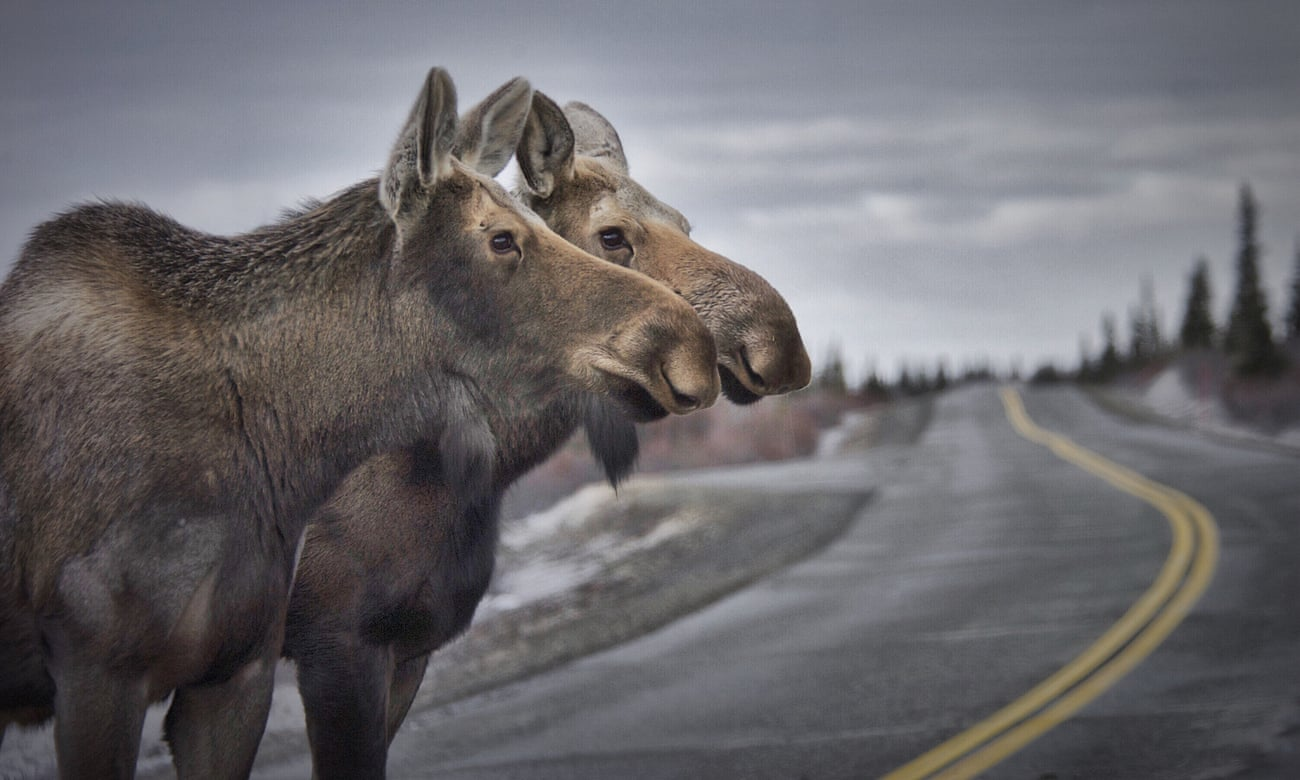 POLL: Should the eating of roadkill be legalized?