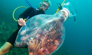 Reef Conservation in Belize with Responsible Travel