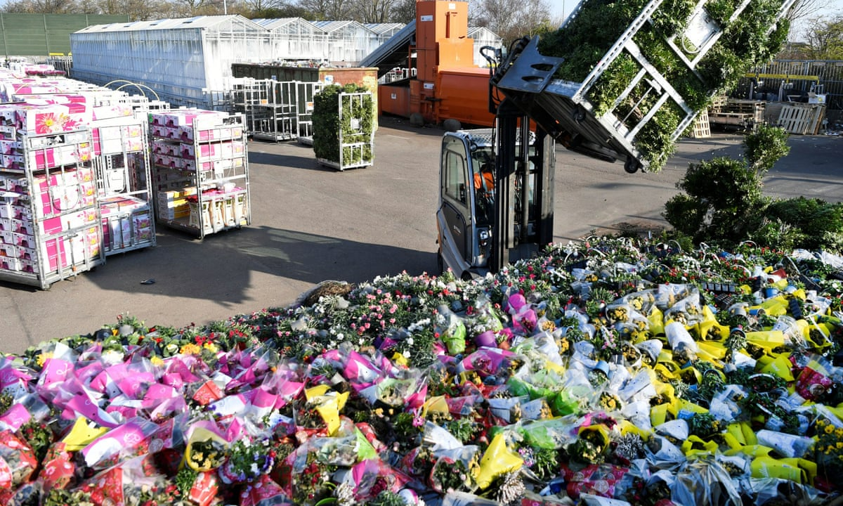 Dutch scheme to boost wilting flower industry takes root | Netherlands |  The Guardian