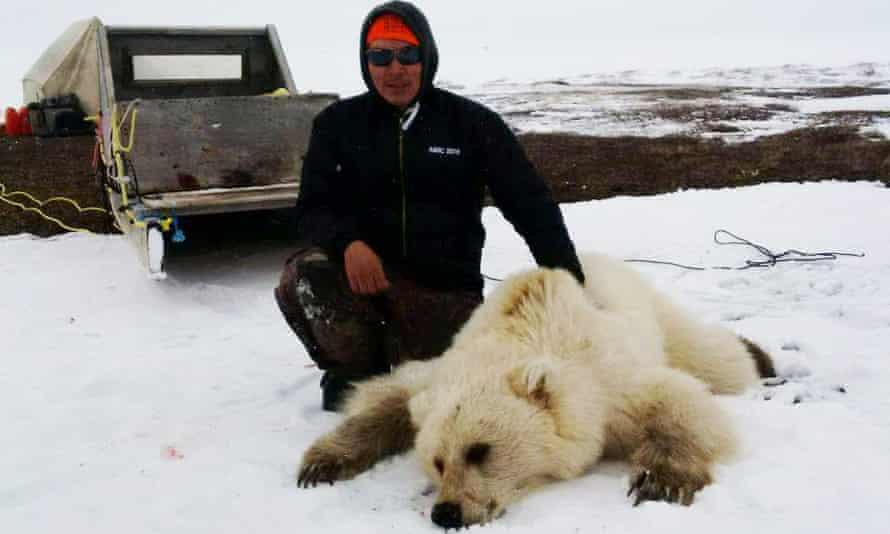 Polar grizzly bear