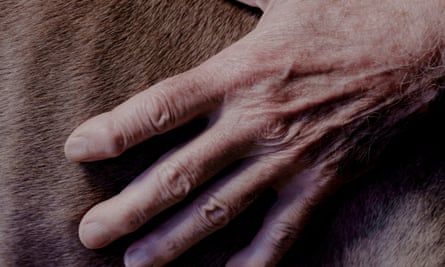 A close-up of a hand, splayed out, on one of the Weimaraner's fur