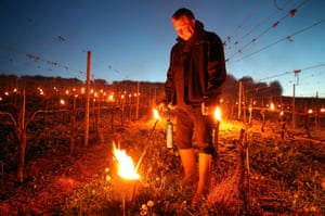 Waitrose Partner Paul Hewitt tends to one of hundreds of candles which were lit in the vineyard of Waitrose's Leckford Estate farm in Hampshire