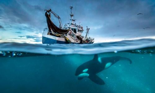 Blue Planet II: can the show help with conservation? | Television