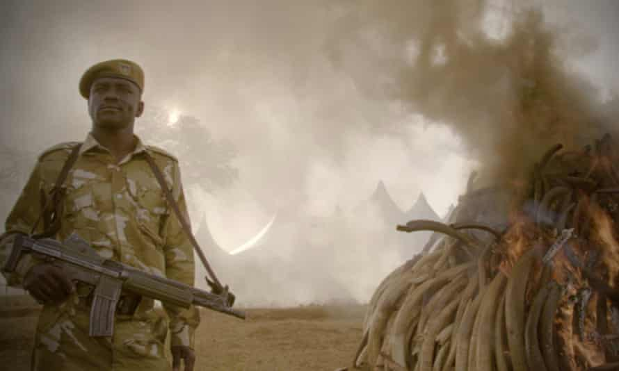 The Ivory Game film still