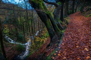 Autumnal woodland near Hebden bridge
