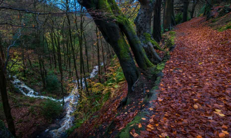 Autumnal woodland path at Hardcastle Crags, near Hebden Bridge, West Yorkshire, after the rain.