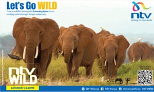 Publicity image for NTV Wild, a series of wildlife documentaries shown on Kenyan TV in 2016