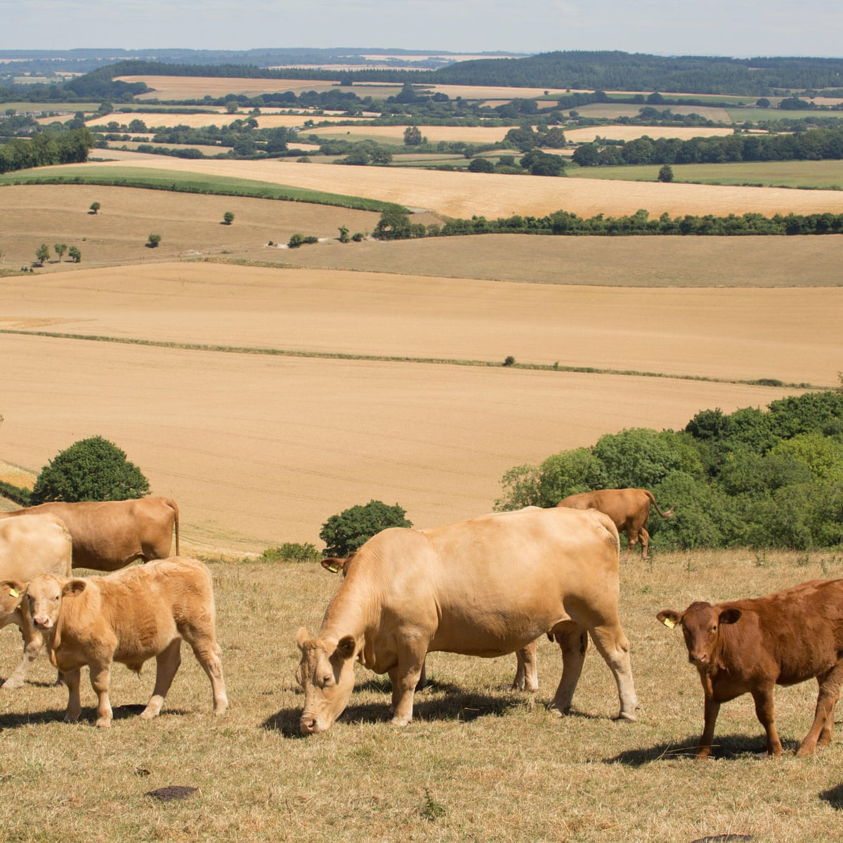 Nearly A Fifth Of The Eu S Budget Goes On Livestock Farming Says Greenpeace Environment The Guardian