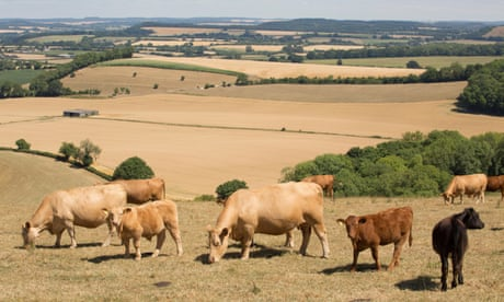 Nearly a fifth of the EU's budget goes on livestock farming, says Greenpeace