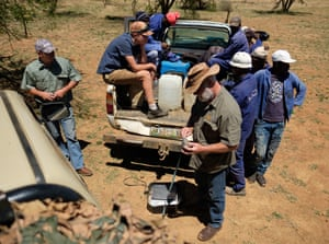 Farm workers wait as the trimmed horn of a black rhino is weighed, measured and marked, at the ranch of rhino breeder John Hume.