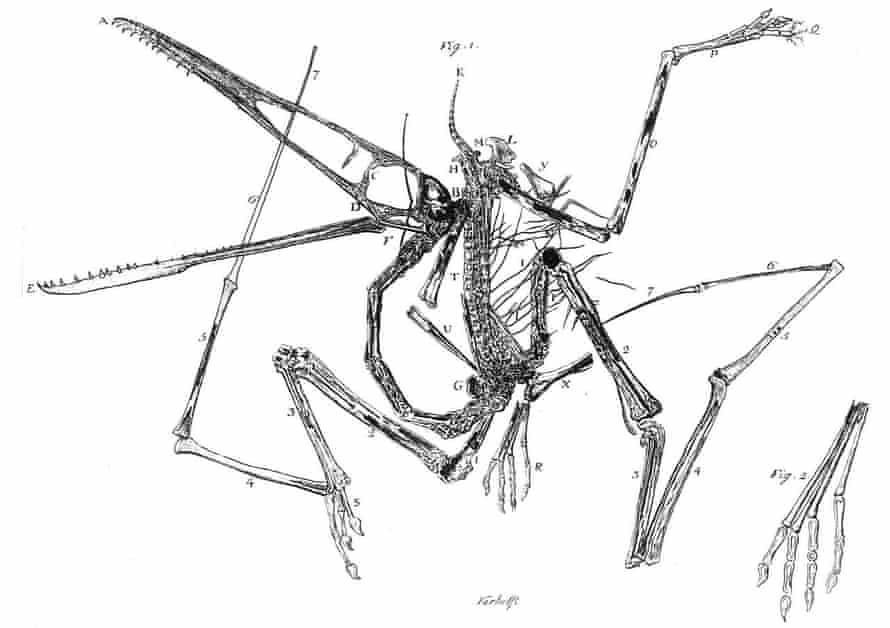 Pterosaurs have been known to science since the 1700s
