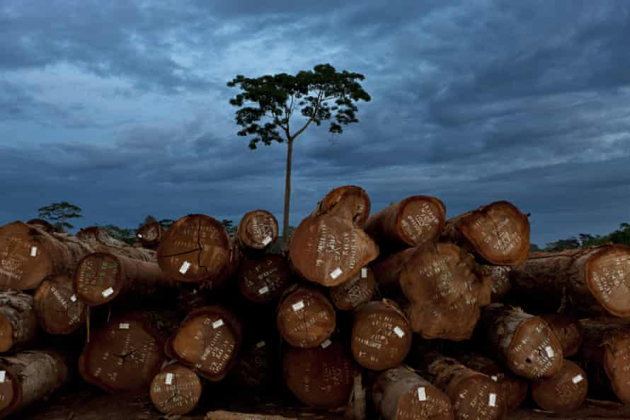 Sustainable logging operations in Mindourou, Cameroon