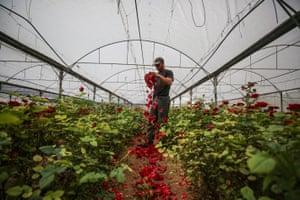Florist destroys flowers