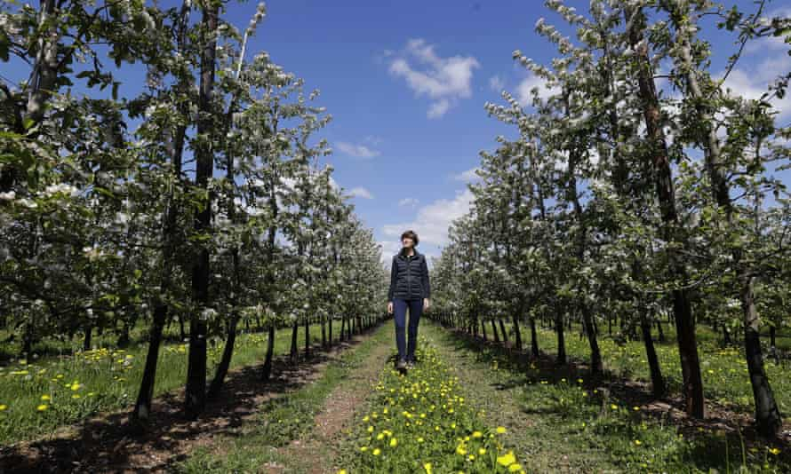 Ali Capper looks towards apple trees in blossom at Stocks Farm in Suckley, Worcestershire