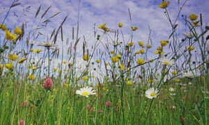 Natural England is duty-bound to defend rare species and protected areas from potentially environmentally damaging developments.