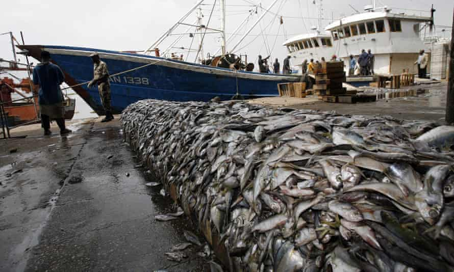 Fish seized at the port of Abidjan from two Chinese ships caught 'bottom trawling'.
