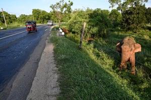 An elephant behind fences beside a motorway near a wildlife preservation site in Minneriya, Sri Lanka.