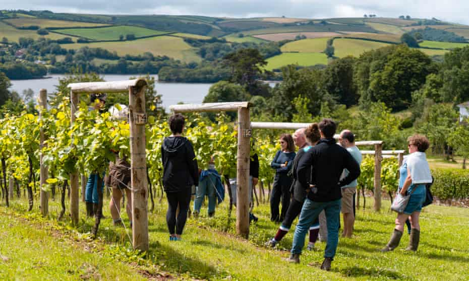 Guests on the Crush Course visit Sandridge Barton winery, Devon, UK