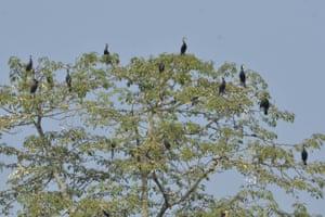 A flock of cormorants