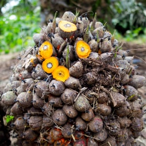 Oil palm bunch