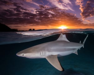 A lone blacktip reef shark lines up its dorsal fin with the setting sun in Mo'orea, French Polynesia. Winner: Female Fifty Fathoms award