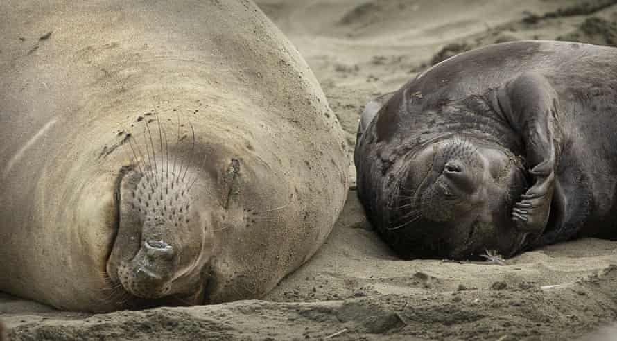 The seals will be allowed to remain until they naturally move on.