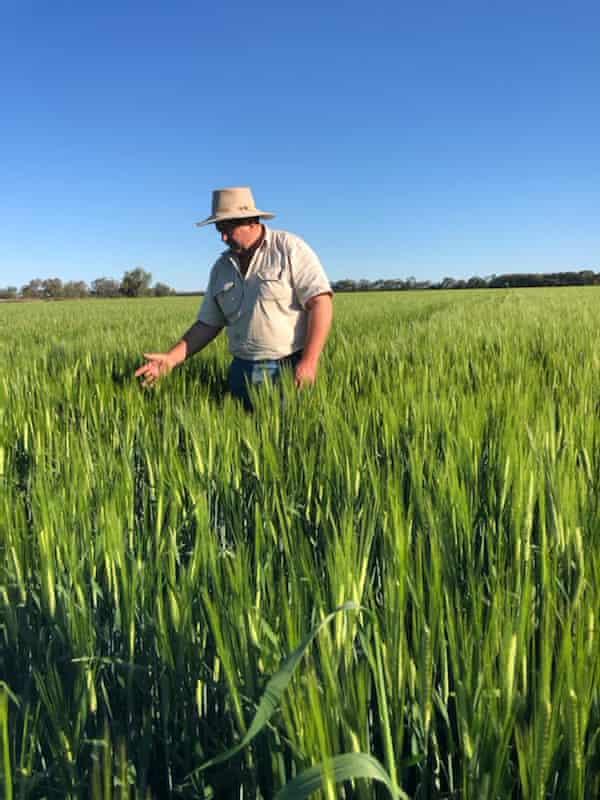 Peter Mailler with his barley crop in Boggabilla, NSW