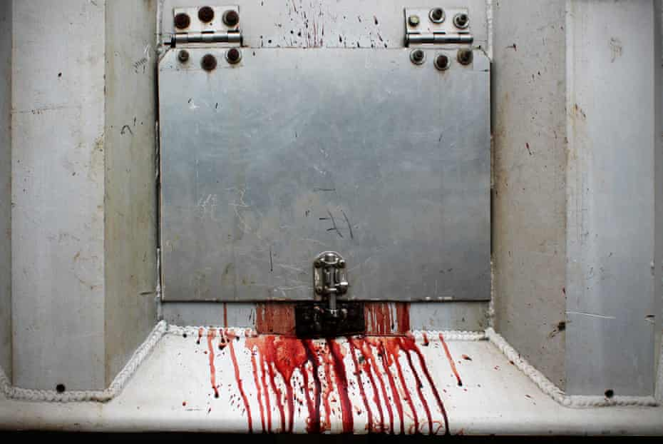 Bloods leaks from a door on a transport truck leaving a slaughterhouse, Canada