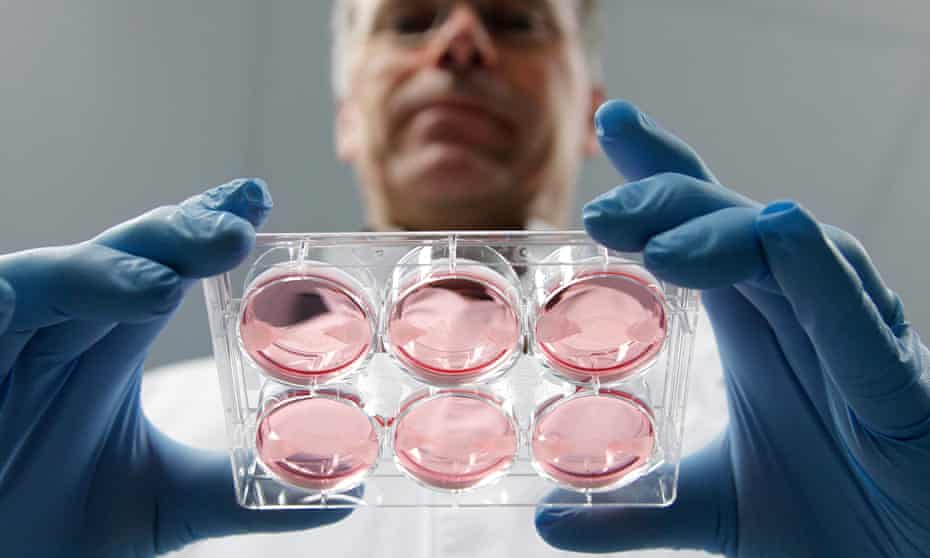 A scientist displays samples of cultured meat grown in a laboratory at the University of Maastricht, 2011.