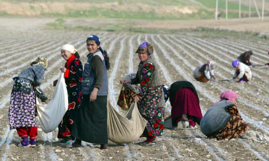 Women pick cotton near the town of Andijan in Uzbekistan