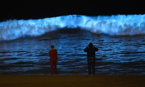 Spectators watch bioluminescent plankton light up the shoreline as they churn in the waves at Dockweiler state beach.